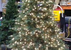 Christmas Tree, 7'6″ Pre-Lit Royal Spruce by Martha Stewart