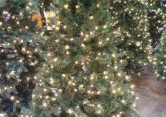 Christmas Tree 6'6″ Pre-Lit Verde Spruce w/400 Clear Lights