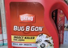 Bugs Beware!!